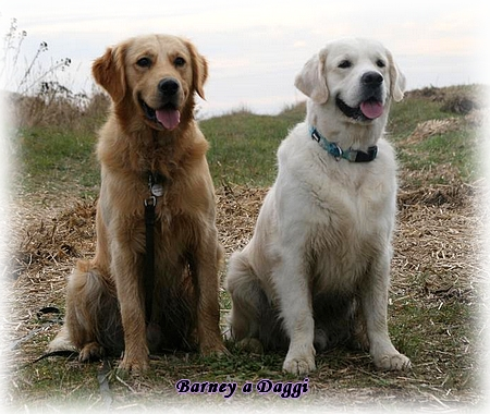 friends Daggi and Barney